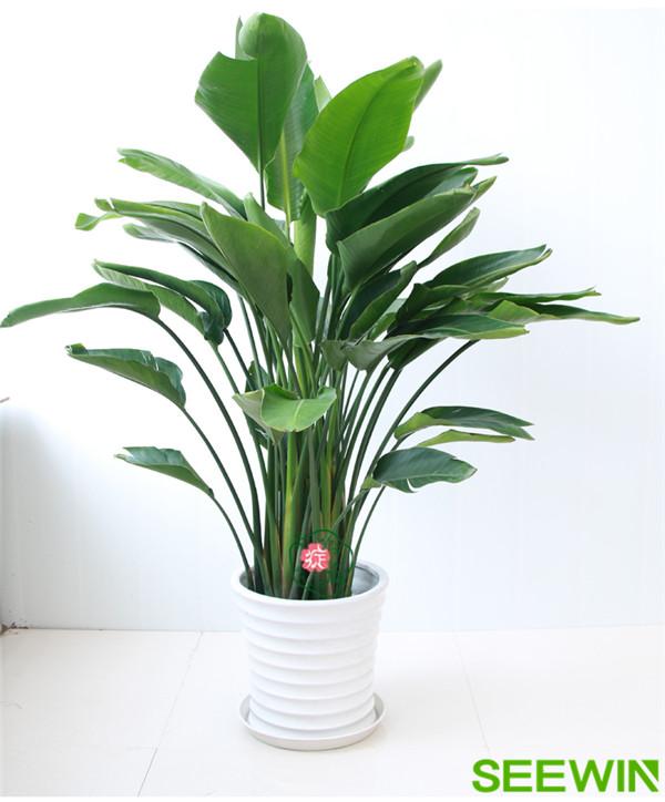 會議室適合擺放什么綠植可以有效吸收甲醛?